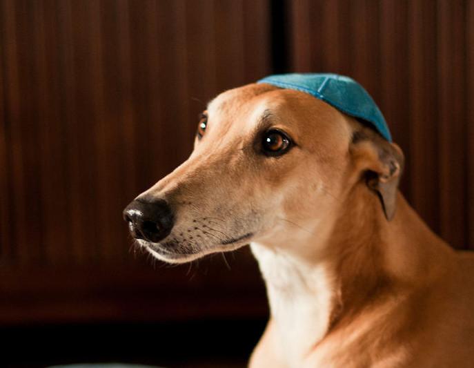 Kippa chien Jewpop