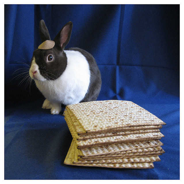 Pessah lapin Pâques Jewpop
