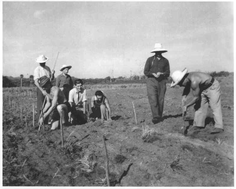 Réfugiés juifs travaillant la terre à Sosua Jewpop