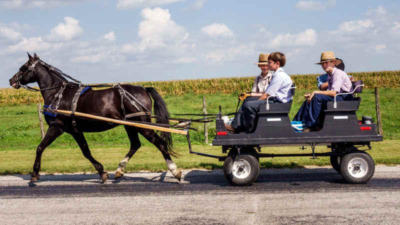 Photo représentant des enfants Amish dans une carriole talithbans Jewpop